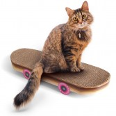 Grattoir skateboard pour chat